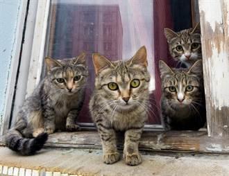 貓群突緊盯櫥櫃飼主嚇壞 網見亮點驚喊:有痴漢!