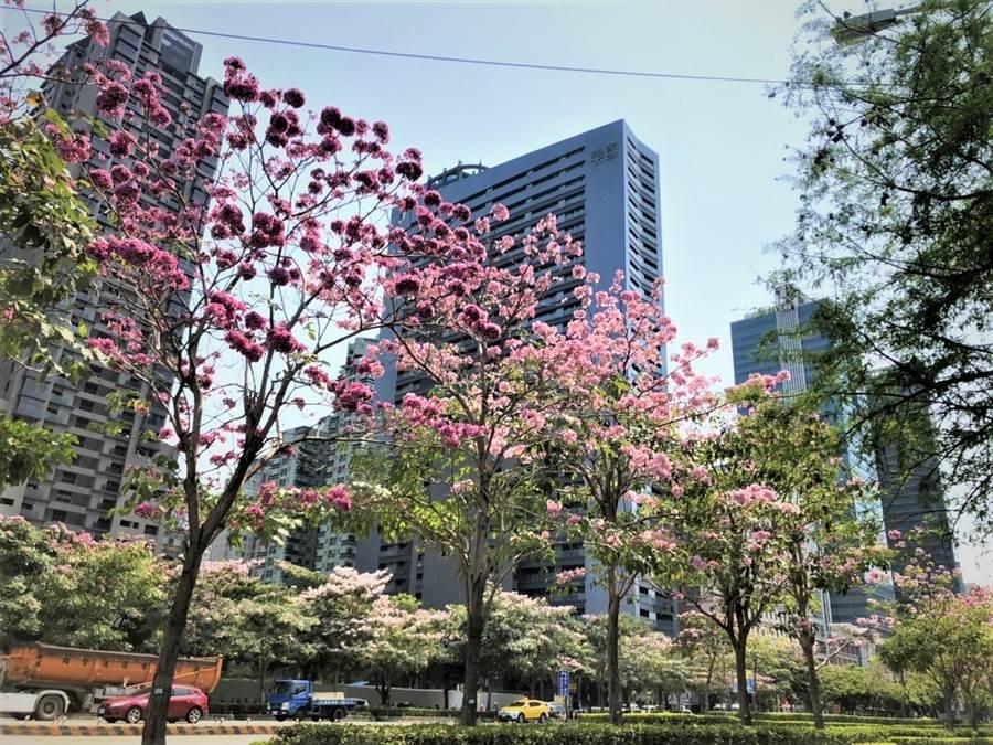 台中市市政路的林蔭大道,綠勢力特色,為都市添美景。(盧金足攝)