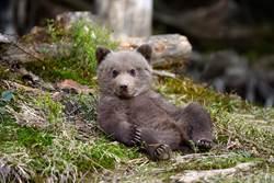 萌狗像泰迪娃娃被領養 3個月後爆衝成長變「小熊」