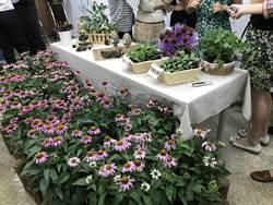 紫錐菊花粹取物可抗冠狀病毒 台中1號搶占9成保健原料市場