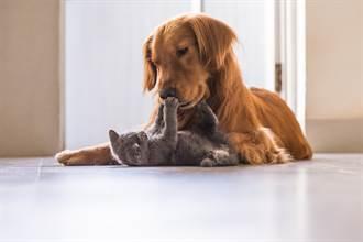 猛犬狂咬小奶貓主人不阻止 超反轉網跌破眼鏡