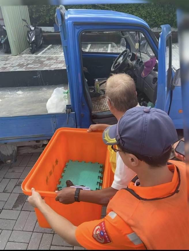 海巡署南部分署第11岸巡隊北堤安檢所同仁16日執行勤務時,於七股潟湖搶救1隻受困於廢棄漁網的海龜。(海巡署南部分署第11岸巡隊提供/劉秀芬台南傳真)