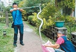 人來了蛇落跑 中市分三區捕抓