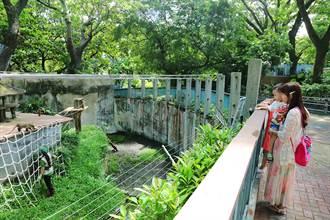 七月玩壽山動物園!「熊」報到 還能陪動物住一晚