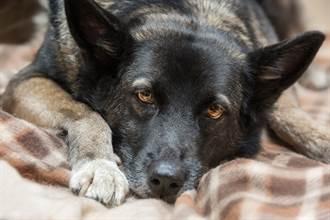 凌晨見愛犬「頭破血流」秒嚇醒 結局反轉飼主哭笑不得