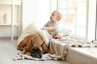 寶寶半夜偷跑下床抱狗入睡 媽見監視器畫面秒融化