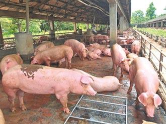70年未殺豬 台糖被要求建屠宰場