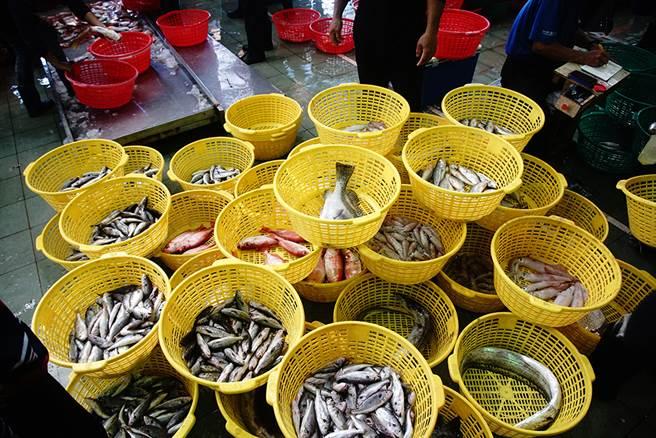 蚵仔寮魚市場最大特色就在於「現撈仔」。(攝影/曾信耀)