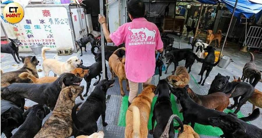 張媽媽希望位在貢寮的狗園新址能夠順利通過建築審核程序,讓毛孩有個安穩的居住環境。(圖/鄭清元攝)