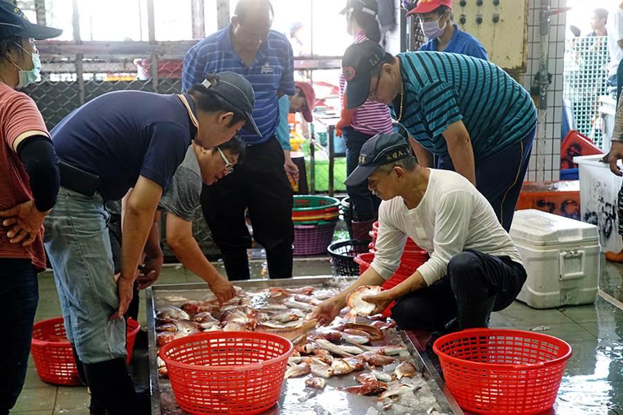 蚵仔寮漁港執行魚貨不落地,嚴格控管衛生。(攝影/曾信耀)