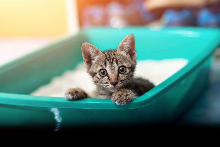 主人親自教用貓砂盆 小奶貓下秒舉動網笑噴(示意圖/達志影像)