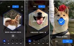 支付寶開放寵物鼻紋識別技術 貓和狗都能買保險