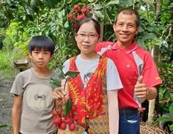 為解馬來西亞愛妻鄉愁 內埔農友種紅毛丹
