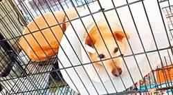 北市動物之家 1人照顧34隻狗