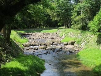 堅持天然素材 金山磺溪頭復育魚區 重建生態秘境