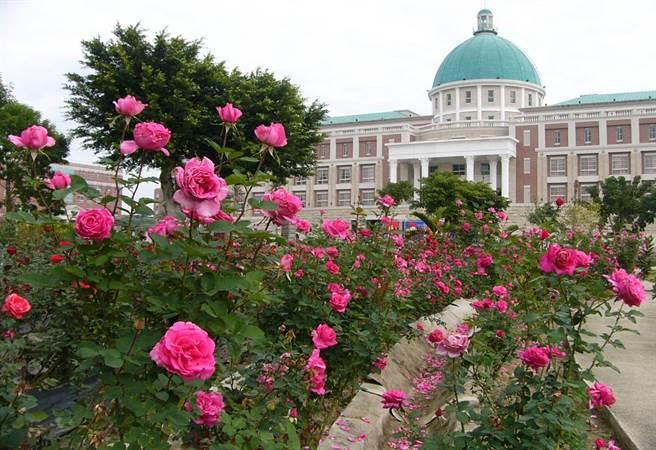 亞洲大學三千玫瑰花園,讓學生漫步在優美校園。(亞洲大學提供)