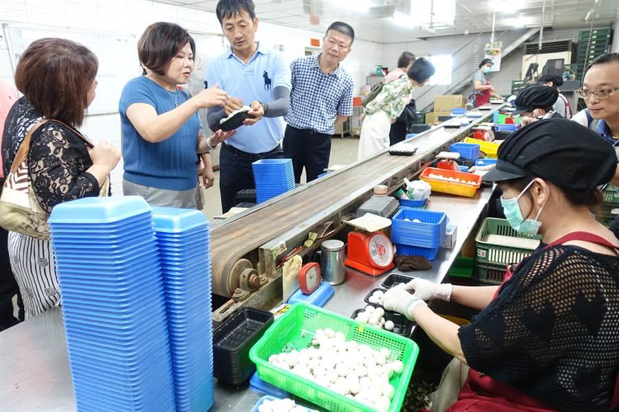 勞動部長許銘春(左二)關心雲林縣虎尾金億陽洋菇農場中高齡員工工作狀況。(許素惠攝)