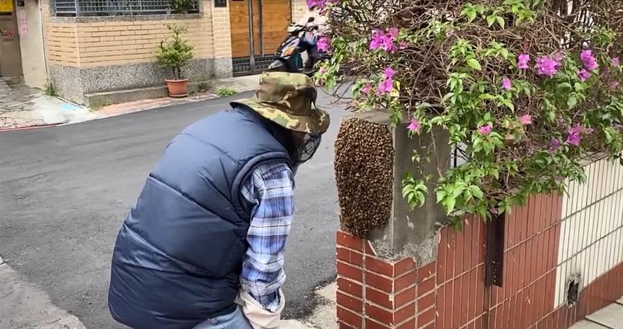 李富城將捕蜂過程Po上臉書,便引起網友熱議討論。(照片/翻攝 李富城 臉書)