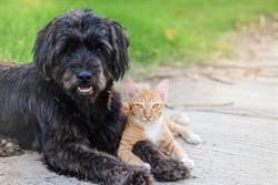 狗被棄養死守門前等主人半年 浪貓不忍陪牠一起等