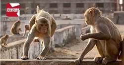 猴群推牆引坍塌…母子睡夢中被壓死 一家7口剩2人