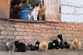 66隻流浪貓霸佔15坪房 主人搬走鄰居超想哭