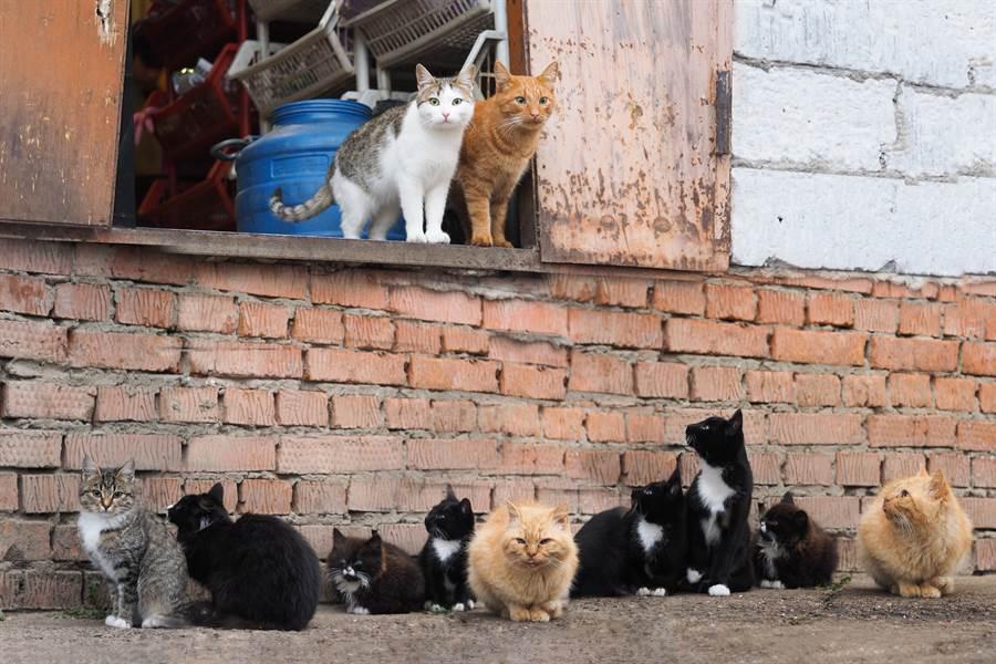 66隻流浪貓霸佔15坪房 主人搬走鄰居超想哭(示意圖/達志影像)