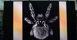 花東恙蟲流行高峰 致死率高達60%