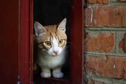 主人回家偷看愛貓身影 下秒超萌毛掌鑽出投信口