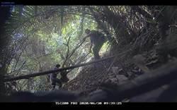 犯行全都錄!花蓮林管處設微型攝影機 揪出山老鼠