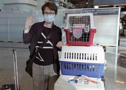 台灣首位女性駐美代表蕭美琴 帶4貓咪啟程赴美就任