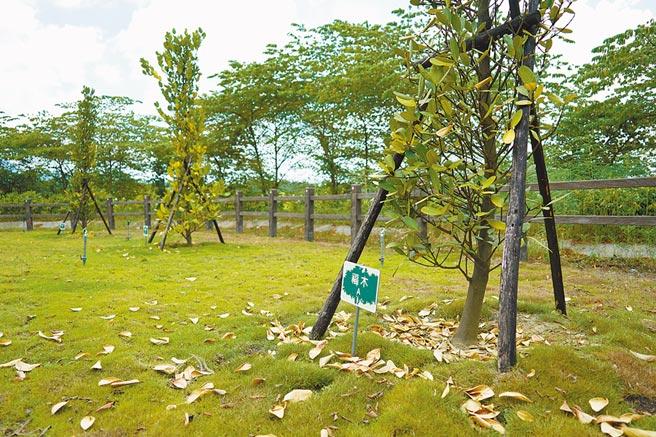 嘉義市立殯葬管理所環保樹葬區「璞真園」4月24日啟用至今3個月,已有42位先人選擇自然葬長眠福樹下。(呂妍庭攝)