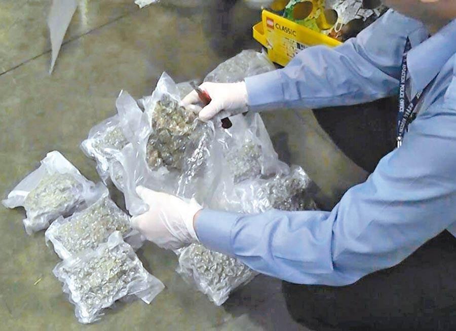 士林警分局在桃園機場查獲5.5公斤大麻花,美籍男自洛杉磯入境遭逮。圖為查獲大麻資料畫面,非本案件。(報系資料照/李文正台北傳真)