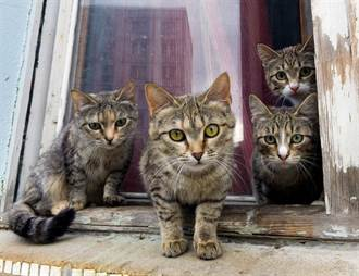 山貓帶5寶寶出現門前 屋主坐搖滾區看餵奶超萌