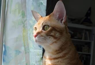 橘貓突頻繁爬上衣櫃 主人細看發現牠驚人秘密