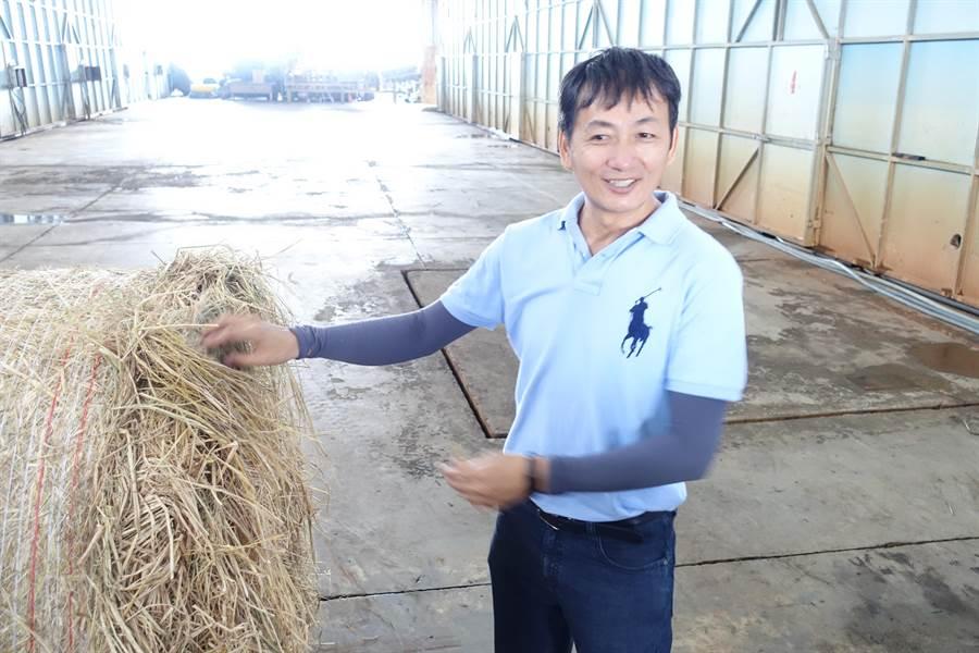雲林縣虎尾金億陽洋菇農場負責人周昭陽收稻草碎化發酵種洋菇,減少焚燒農廢稻草造成的空汙。(許素惠攝)