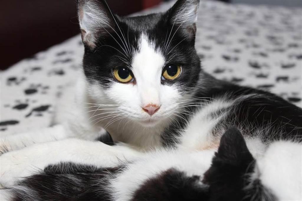 黑貓初現小奶貓想下馬威 超反轉百萬人笑歪(示意圖/達志影像)