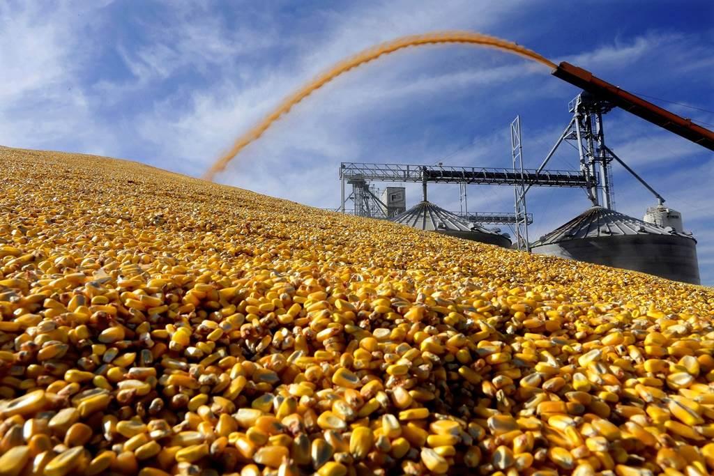 大陸近期狂買美國玉米,但川普認為,貿易協議對他來說已不太重要。(美聯社)