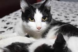 黑貓初現小奶貓想下馬威 超反轉百萬人笑歪