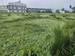 颱風季來臨!農作物如受天災 可拍照存證申請救助