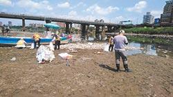 魚群熱到暴斃 新北清126噸魚屍