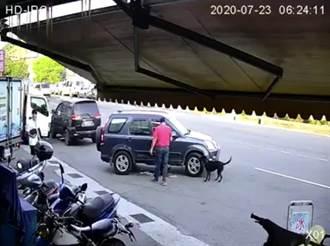 恐怖!基隆男開車來回輾斃黑狗 下車碎念「怎麼都不走」