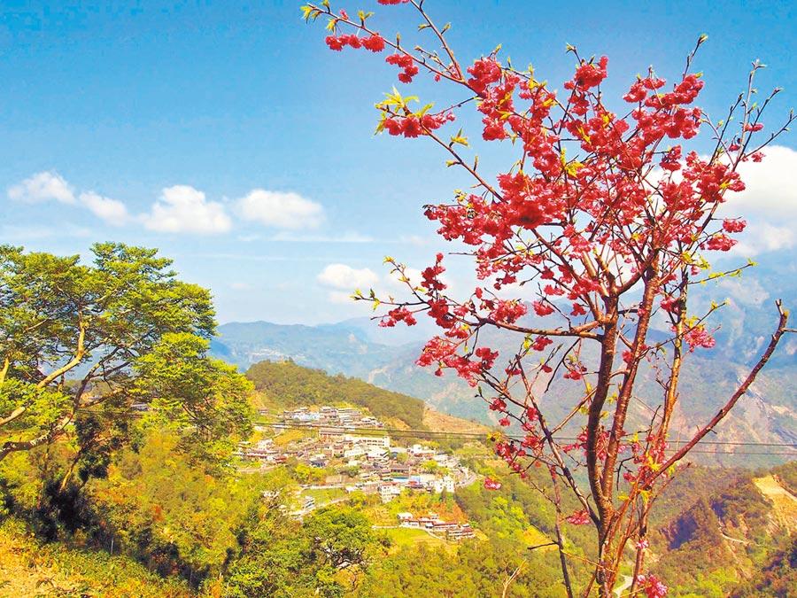 霧台山林景色優美,櫻花吸引許多遊客上山。(潘建志攝)