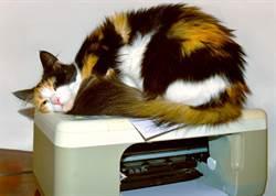 貓總裁霸佔影印機 印出A4高清肉球萬人暴動
