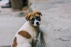 愛犬失蹤1個月奇蹟現身 獨走30公里返家指甲全磨平