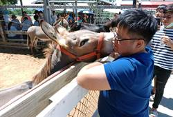 認出2年前照顧員,驢子對他做了這件事