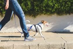 出門散步遛狗突遭路人痛罵 他揭超委屈真相網笑翻