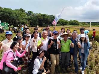 都市小農夫來了!淡水忠山里捐稻田供體驗 大小朋友割禾樂開懷