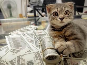 酒吧老闆領養調皮「貪財貓」 叼整疊鈔票跑路被抓包