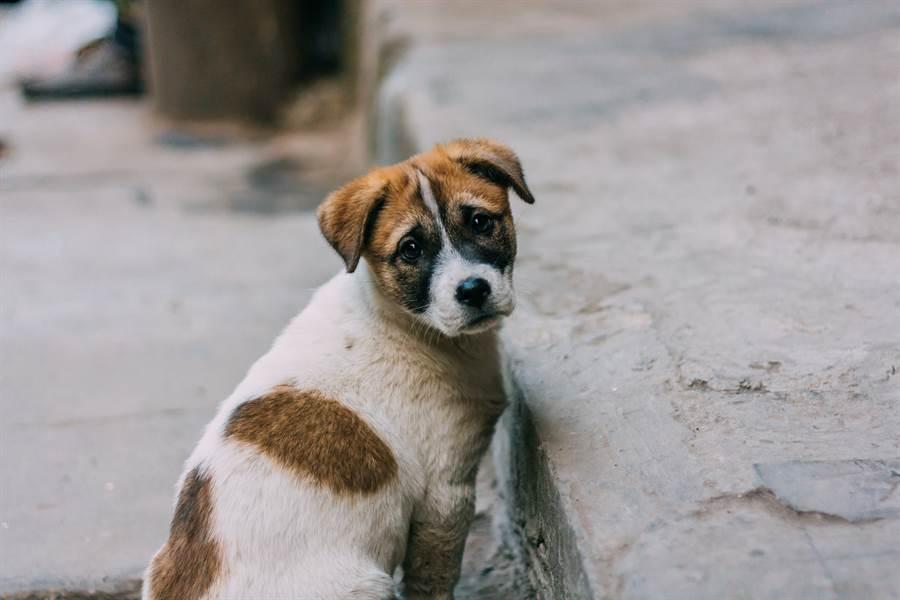 愛犬失蹤1個月奇蹟現身 獨走30公里返家指甲全磨平(示意圖/達志影像)