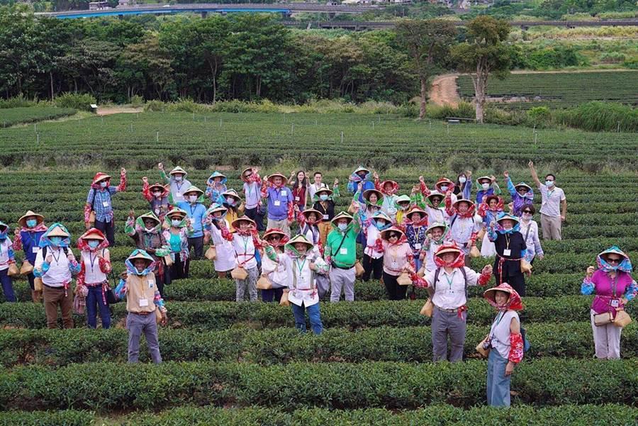 吳釗燮與使節團於銅鑼茶廠體驗傳統客家採茶。(圖由外交部提供)